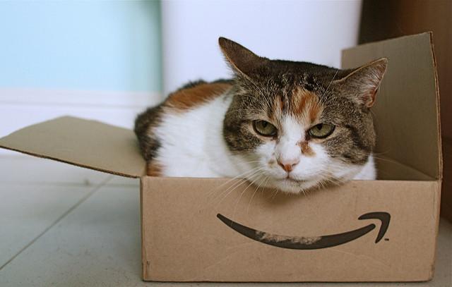 Cat in box image