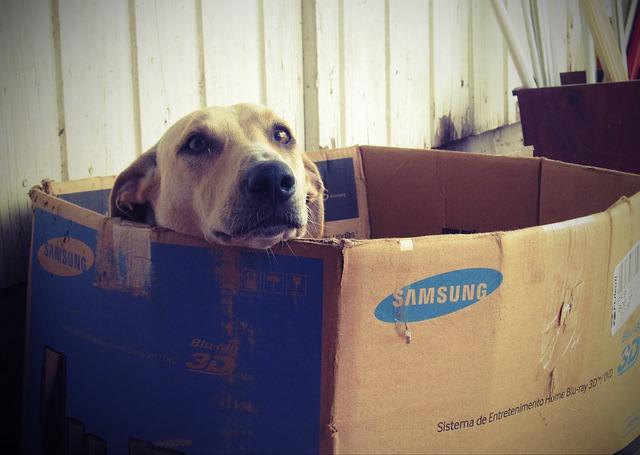 Dog in box image