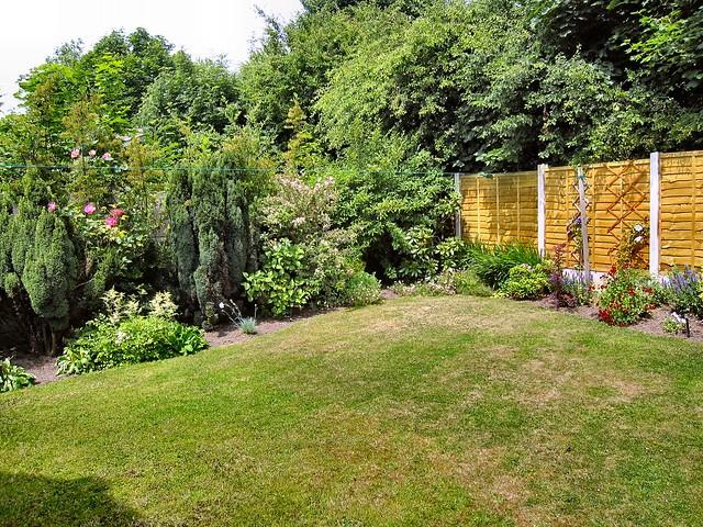 Back garden photo
